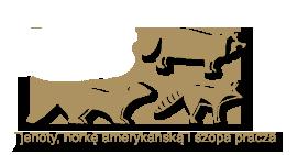 lisy jenoty norke amerykanska szopa pracza1