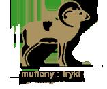 muflony-tryki owce jagnieta