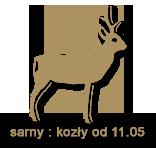 sarny - kozly1