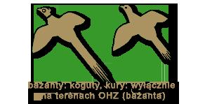 bazanty-koguty kury