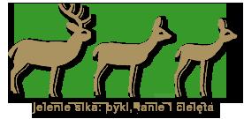 jelenie sika -  byki lanie cieleta