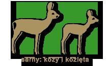 sarny-kozy kozleta