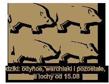dziki- odynce wycinki przelatki warchlaki lochy1
