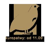 kuropatwy1